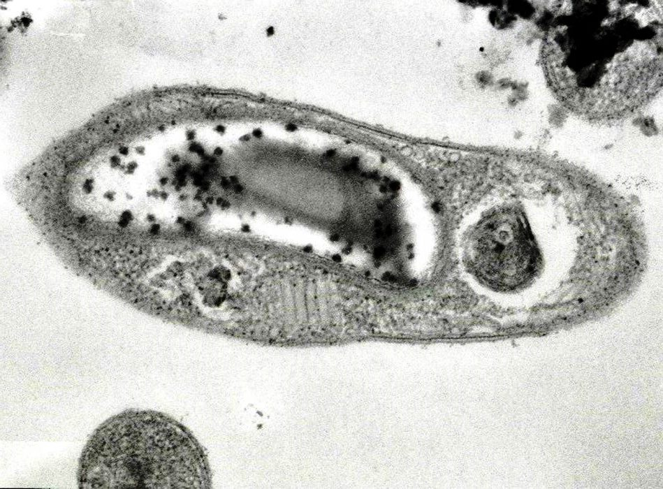 bacteria marte