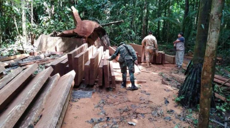 madera secuestrada